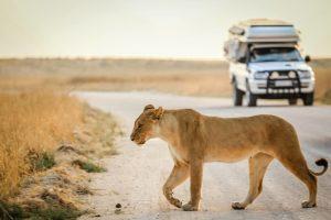 Serengeti - Tanzanie - Voyage