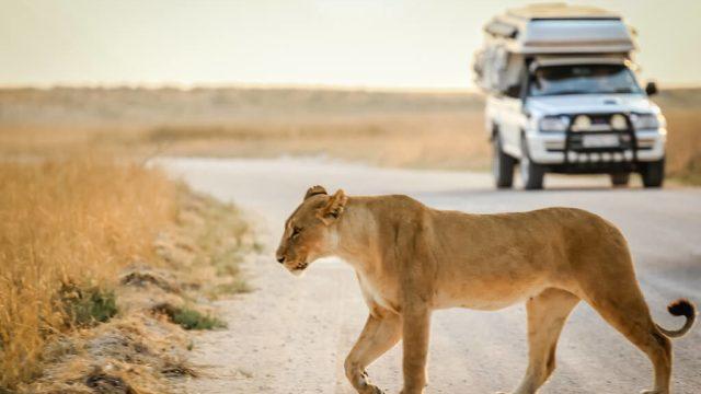 Serengeti - Tanzania - rejser