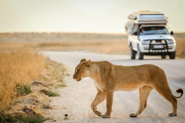 Serengeti - Tanzania - reise