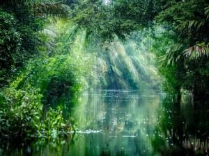 Brésil - Amazone - Vue sur le fleuve - Voyage