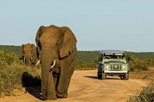 Elefant, Sydafrika - rejser