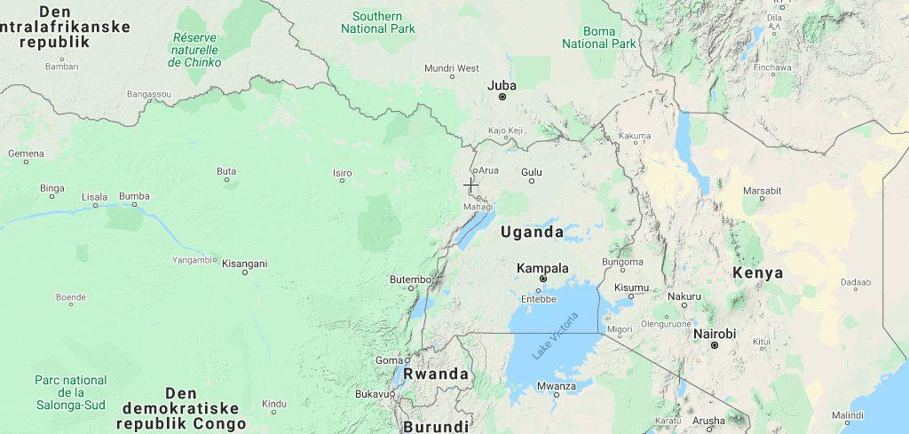 gorillaer i Uganda rejser U