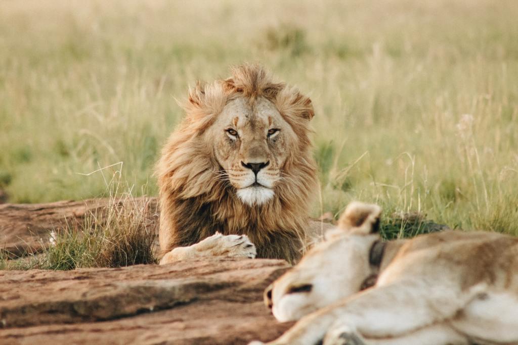 Sydafrika - Afrika - Safari - Rejser