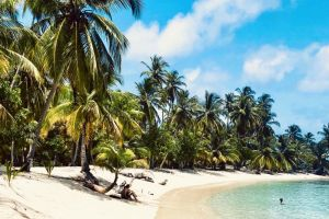Panama San Blas Palme Strand Rejser