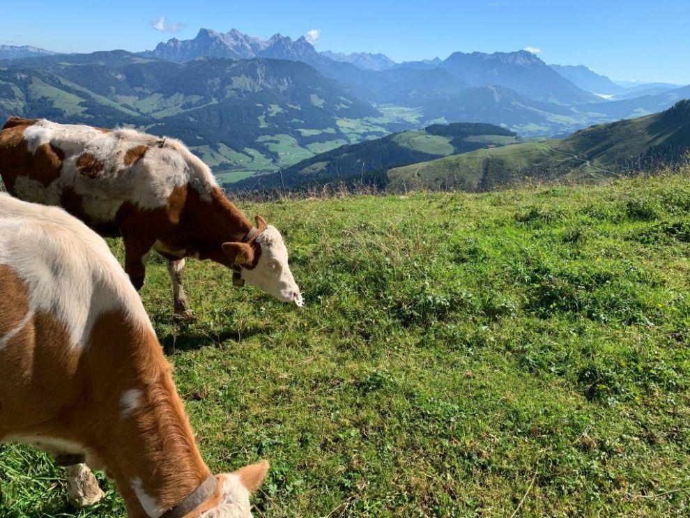Østrig Tyrol st johann rejser