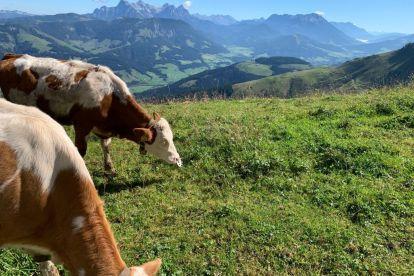 Austria Tyrol st johann travel