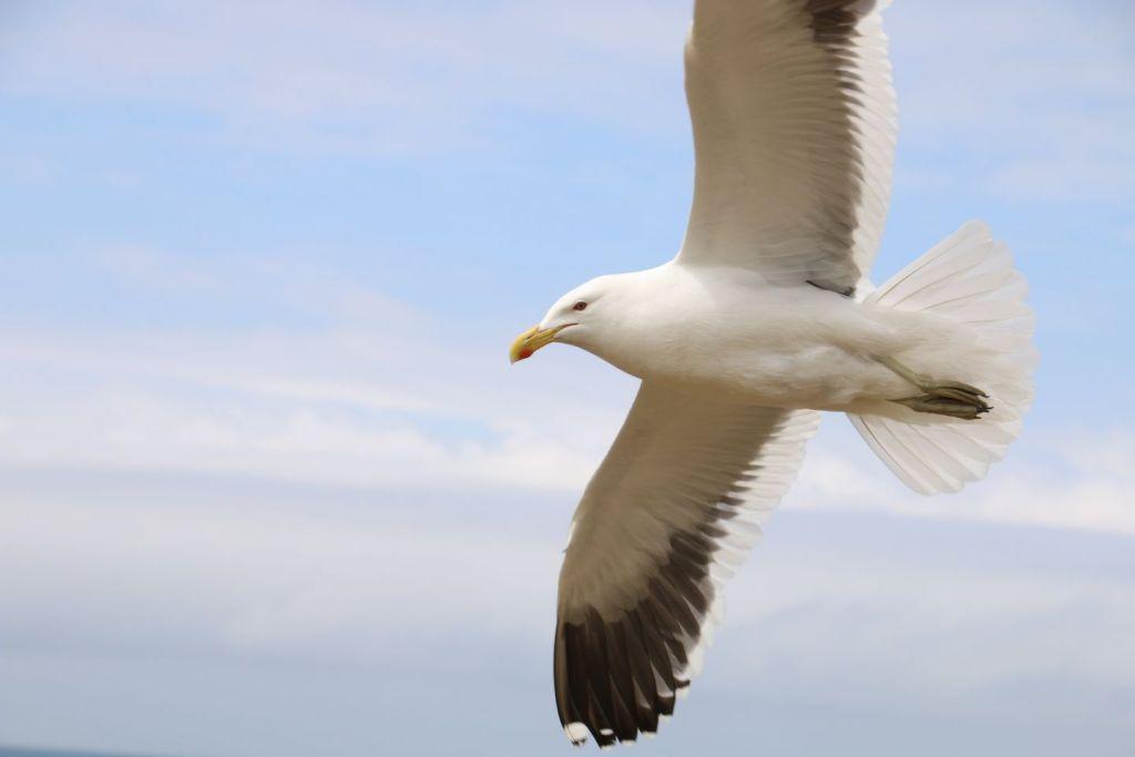 New Zealand Dundin King Albatross Travel