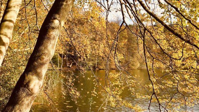 Tyskland Mölln Sø Skov Natur Rejser