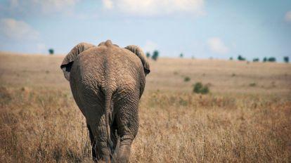 Afrika Tanzania Elefant Safari Rejser