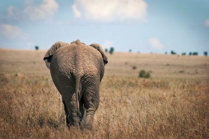 Afrika Tanzanija Elephant Safari Travel