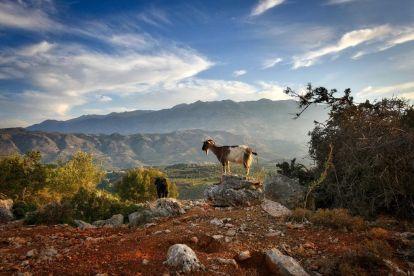 Yunanistan Girit Dağlarında Keçi Seyahati