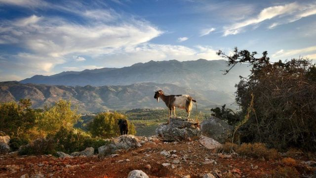 Greece Crete Mountains Goats Travel