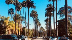 USA Los Angeles, palmer, rejser