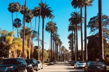 USA Los Angeles, palm trees, travel