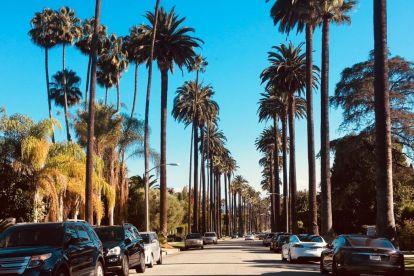 USA Los Angeles, palmuja, matka