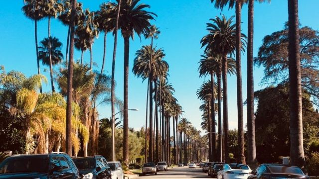 USA Los Angeles, palm trees, travel