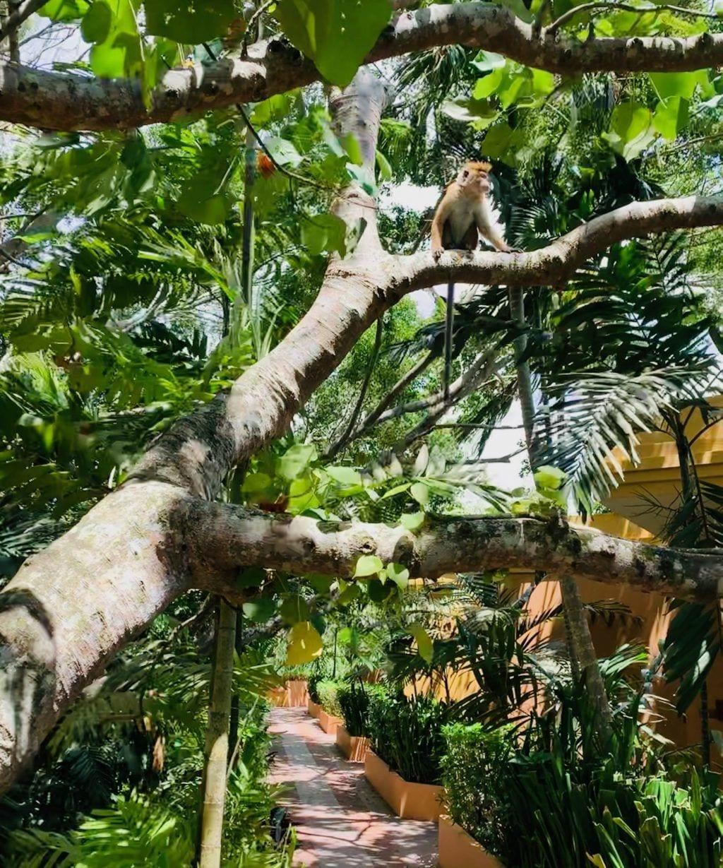 Sri Lanka - Barberyn ayurvedic beach resort weligama - abe - rejser