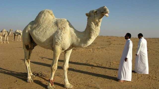 Disyerto ng paglalakbay sa Saudi Arabia