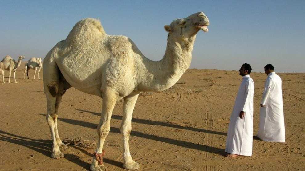 Saudi Arabien ørken rejser