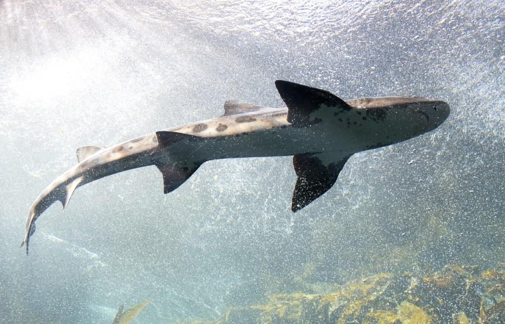Hai, akvarium - reise