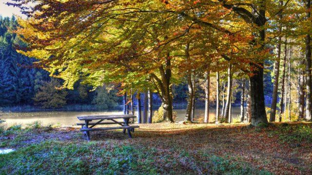 Denmark - Bornholm - Rø - plantation - forest - Travel