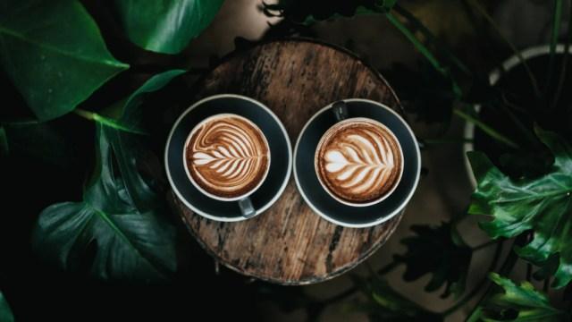 Danmark, 7 kule kaffebarer, kaffe og planter reiser