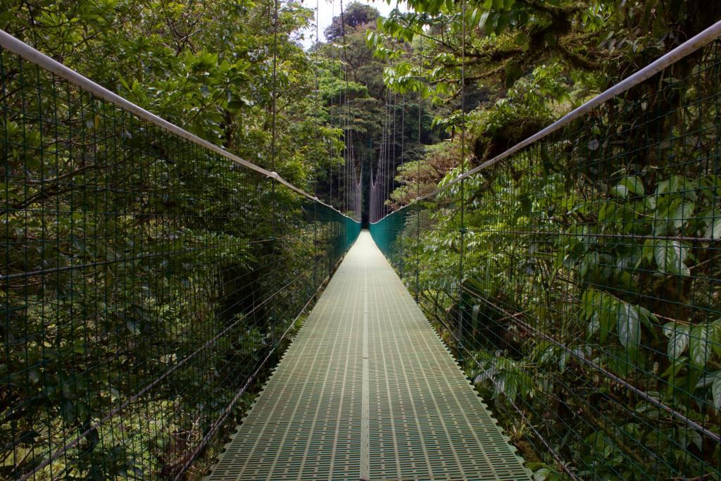 Costa Rica, Monteverde, bro, regnskov, rejser