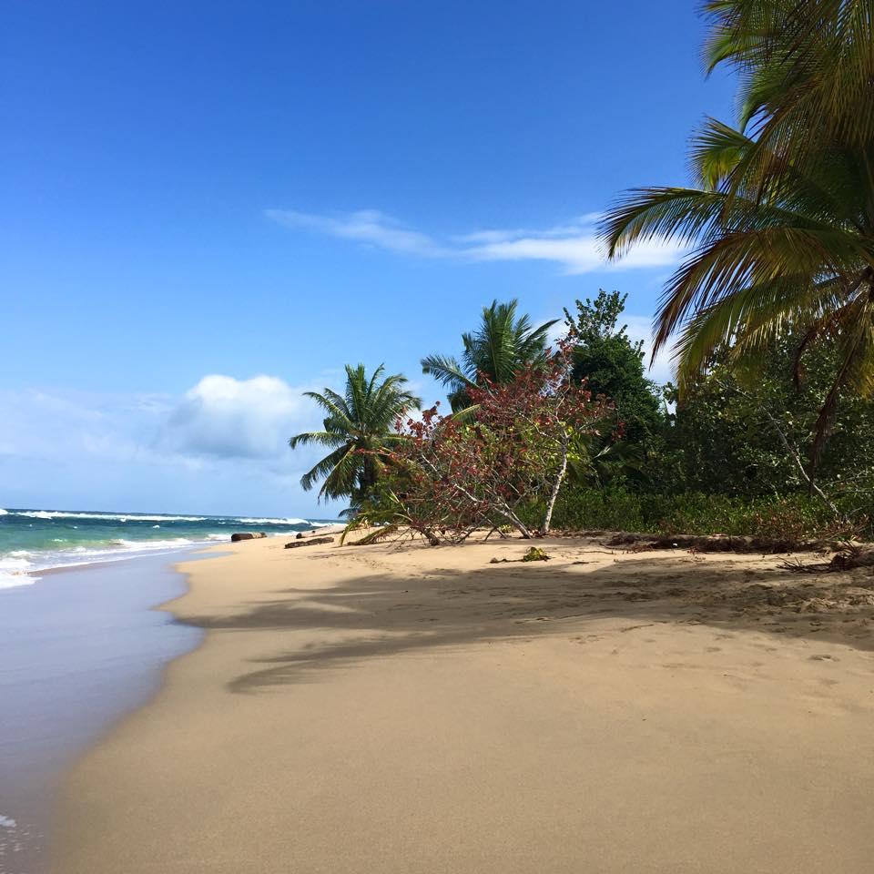 Costa Rica, Puerto Viejo, Punta Uva, strand, rejser