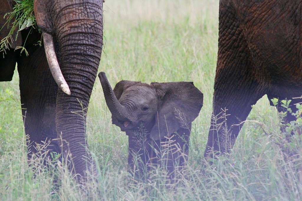 No trip to Africa without safari experiences