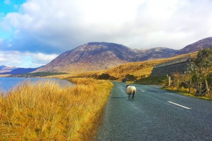 Ireland - road - sheep - coast