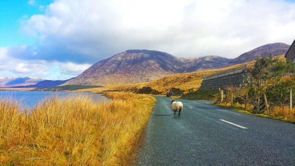 Irlande - route - mouton - côte