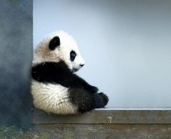 ateliers petit panda