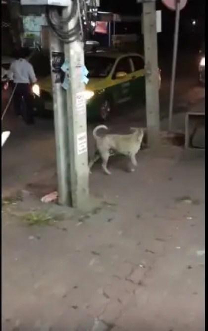 stray dog on the street