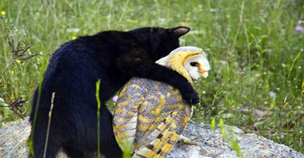 Cat And Owl Are Unusual Best Friends But When They Start