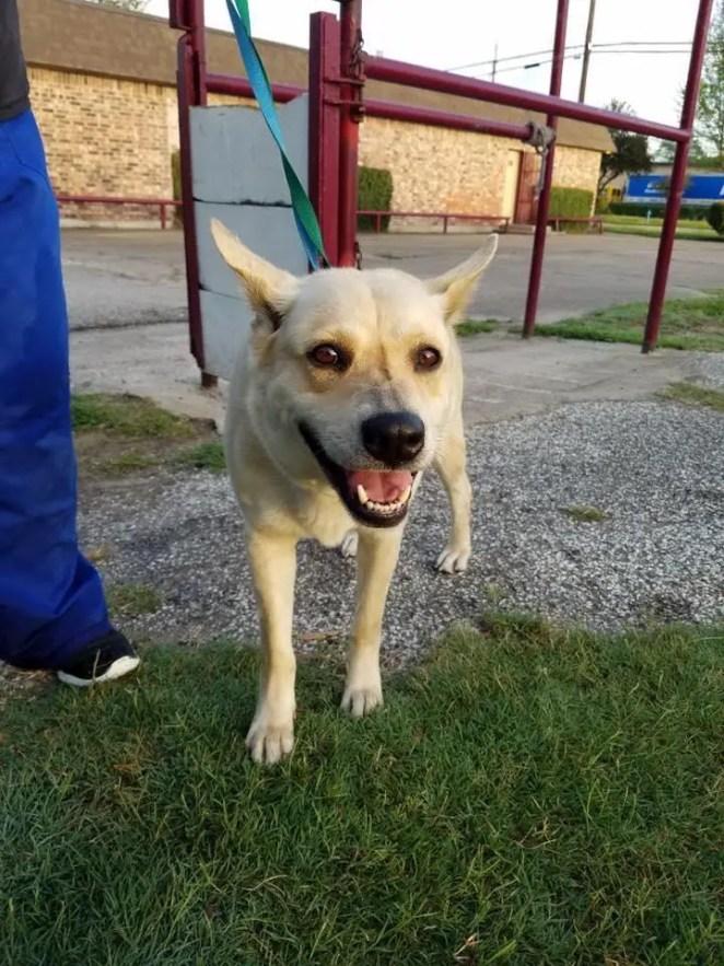 dog surrendered