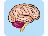 teaching strategies brain