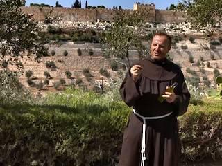 Recogiendo aceitunas en Getsemaní