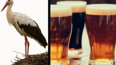 Photo of Un nido de cigüeñas impide la producción de cerveza en Alemania