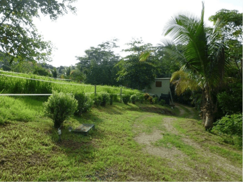 Delicias-Home-Farm
