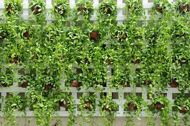 As plantas para jardins pequenos fazem isolamento acústico e equilibram a temperatura