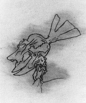 Cabeza de Homo Rodans (Dibujo Previo), 1959.