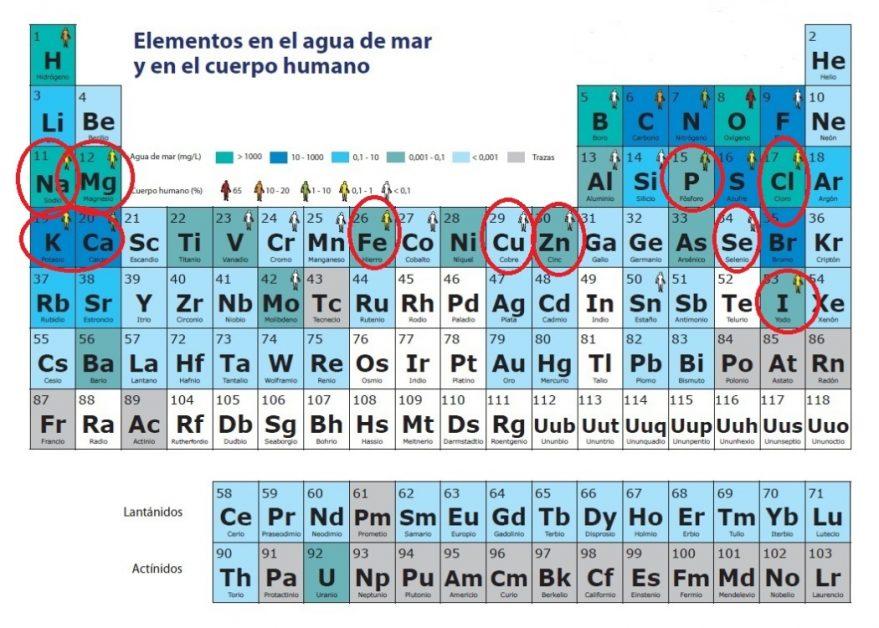 Vitaminas minerales y hormonas 2 parte remediosfitoterapia tabla peridica con los minerales o elementos que el agua de mar comparte con el cuerpo humano un testimonio en youtube urtaz Gallery