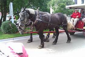 man driving carriage
