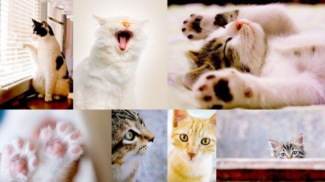 11 Amazing Tips For Cat Lovers To Shoot Beautiful Cat Photography