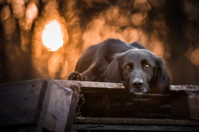 7 Wonderful Tips To Make Your Black Dog Photography More Effective