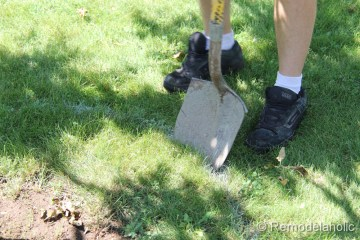 Mulch Weed Control Around Trees-3