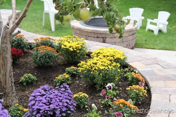 planting fall flowers-15