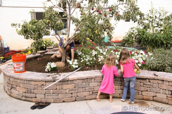 planting fall flowers-2