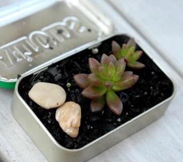 DIY mini succulent garden