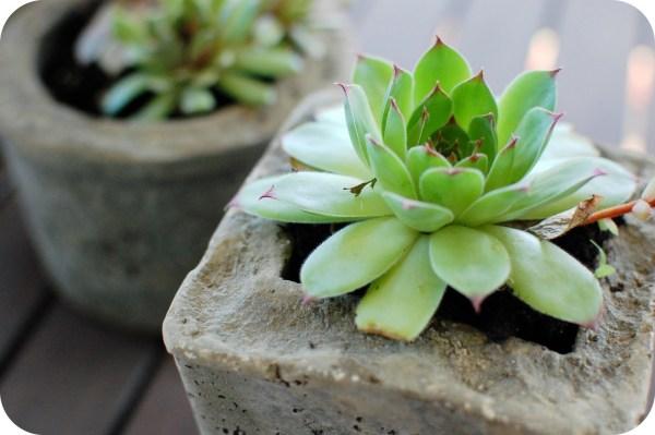 hypertufa lightweight cement planters
